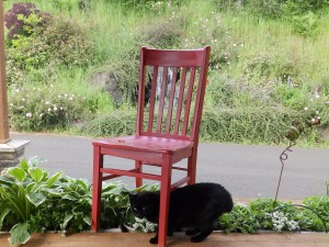 Red Chair and Stumpy