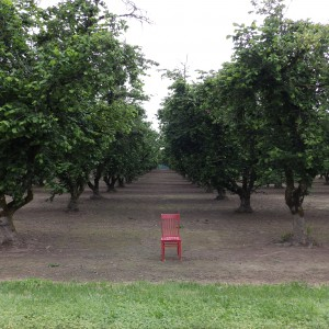 Hazelnut Orchards