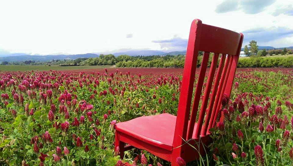 Fields of clover for red chair travels