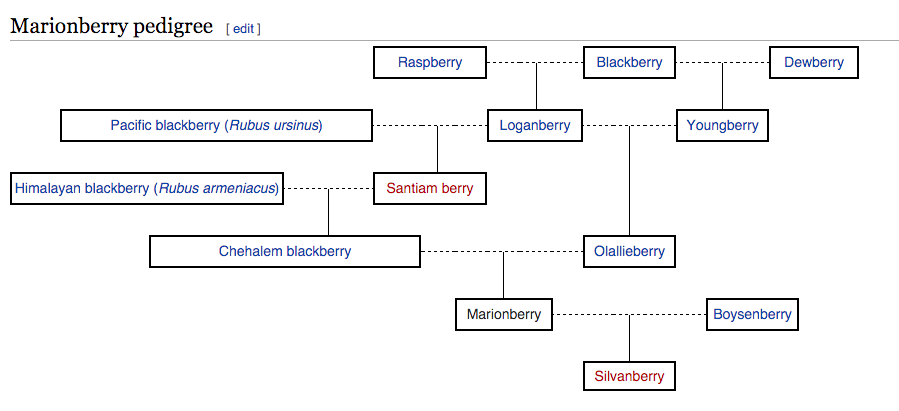 The Marionberry