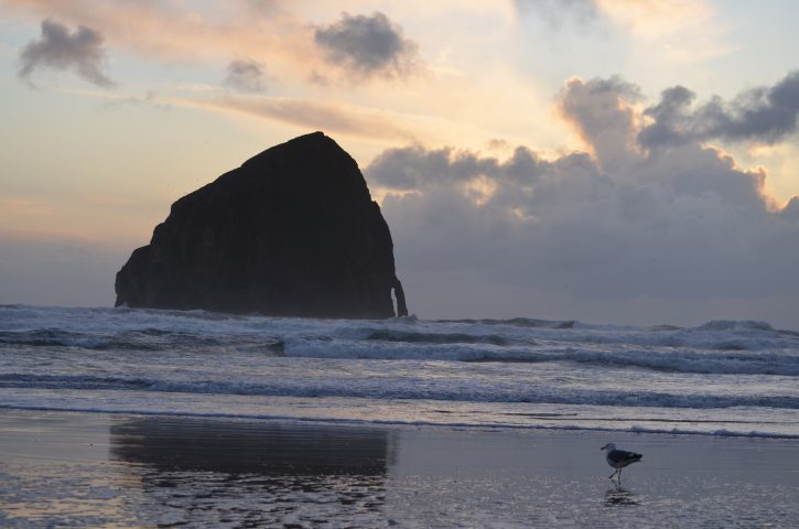 Oregon Coast Birding