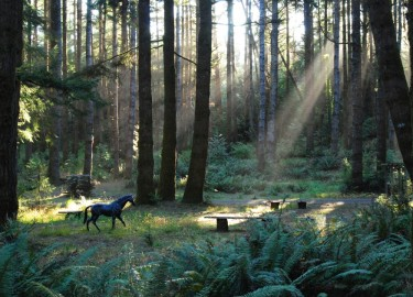 Forest scene in Oregon's South Coast - WildSrping Guest Habitat